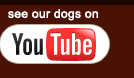 Click here to open our Ozark Redbone Coon Hound You Tube Channel in a new window!